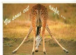 Girafe Vu Sous Cet Angle... - Girafes