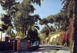 Bordighera - Imperia - Strada Romana - 513-073 - Formato Grande Non Viaggiata – E 10 - Imperia
