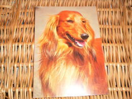 Hund Dog Postkarte Dackel Teckel Dachshund - Hunde