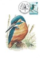 1993 Martin-pêcheur D'Europe, Eisvogel, Alcedo Atthis, Kingfisher, Dessin: André Buzin  Michel 2019:1330,14+2Fr. - Maximum Cards