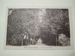 F5 CARNAC PLAGE   Avenue Des Druides - Carnac
