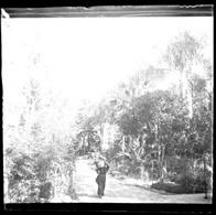 Dans Un Jardin à ANTIBES 06 Alpes Maritimes - Une Femme Portant Un Panier En 1898  Plaque De Verre - Taille 43 X 45 Mlls - Plaques De Verre
