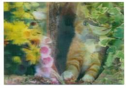Trójwymiarowa Lenticulaire 3D - Zwierzęta Kot Cat - Gatti