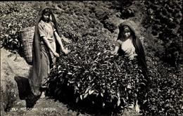 Cp Ceylon Sri Lanka, Tea Plucking Women, Portrait - Sri Lanka (Ceylon)