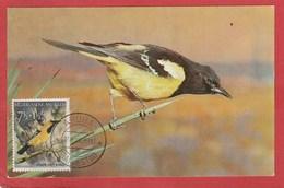 Carte Maximum - Oiseaux - Icterus Parisorum - Aruba 1958 - Moineaux