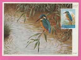Carte Maximum - Oiseaux - Martin Pêcheur - R. De San Marino - Oiseaux
