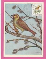 Carte Maximum - Oiseaux - Bruant - R. De San Marino - Moineaux