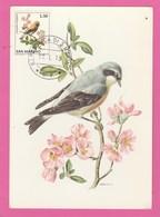 Carte Maximum - Oiseaux - Traguet Motteux - R. De San Marino - Moineaux