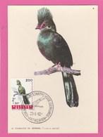 Carte Maximum - Oiseaux - Touracou Du Sénégal - Belgique - 1962 - Oiseaux