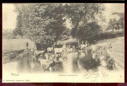 Cpa Athus   Vaches  1906 - Aubange