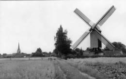 ZINGEM (O.Vl.) - Molen/moulin - Meuleken 't Dal Na De Restauratie In Open Landschap. Kerk Op De Achtergrond. (1986) - Zingem