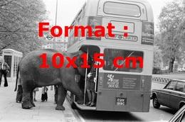 Reproduction D'une Photographie Ancienne D'un éléphant De Cirque Entrant Dans Un Bus En 1979 - Reproductions