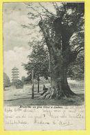* Laken - Laeken (Brussel - Bruxelles) * Le Gros Tilleul à Laeken, Pavillon Chinois, Arbre, Tree, Boom, Parc, Rare - Laeken