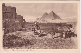 EGYPTE - LE CARE - CAIRO -  VUE DES PYRAMIDES OF GIRA  _ ATTELAGE DE BOEUFS - Le Caire