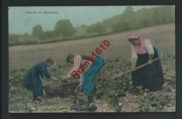 Culture De Betteraves. Paysans Au Travail. Carte Photo CLD. Brillante. Circulé En  1910. 2 Scans. - Paysans