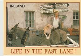 CP - PHOTO - IRELAND - LIFE IN THE FAST LANE - PEOPLE & PLACES - 141 - E. NAGELE - JOHN HINDE - Irlande