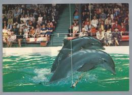 NL.- ZANDVOORT. DOLFIRAMA. - Dolfijnen