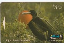 Fiji - Greater Frigate Bird - 09FJB - Fiji