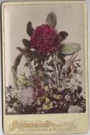 Australie - Fleurs De Bush Waratah - Photographie XIXème Siècle - Wishing You The Compliments Of The Season - Australia