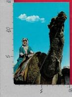 CARTOLINA NV ARABIA SAUDITA - A Ride On The Camel - Cammello - 10 X 15 - Arabia Saudita