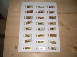 Sigarenbanden Mercator  Serie Aziatische Kunst 24 St - Bagues De Cigares