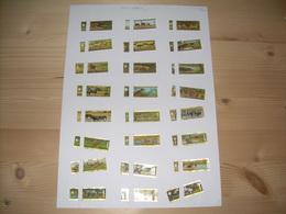 Sigarenbanden Mercator  Serie Safari 24 St - Bagues De Cigares