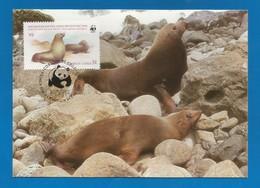 Chile 1984 ,  Juan Fernandez Fur Seals / Der Juan-Fernandez-Seebär - WWF Officiale Maximum Card - 24.X.84 - Chili