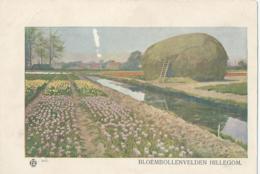 Hillegom - Bloembollenvelden Hillegom - Nederland