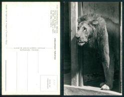 MOÇAMBIQUE [ 0281 ] - GORONGOSA BEIRA ONTEM CASA DE HOMENS HOJE DE LEÕES LION - Mozambique