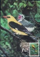 1992 Loriot D'Europe, Pirol, Oriolus Oriolus, Photo: Eva Lasswitz, Michel 2019:1306, 14+2Fr. - Maximum Cards