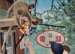Mt. Takasaki National Park Japan, Fuji Camera Film Sign, Monkey Fed By Tourist, C1960s Vintage Postcard - Japan
