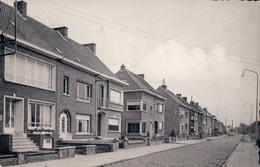 Boom Th. Van Rijswijcklaan - Boom