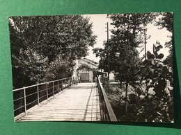 Cartolina Trattoria Ongina - Vidalenzo Di Polesine Paramense - 1960 - Parma