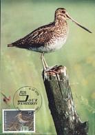 1993 Bécassine Des Marais, Bekassine, Gallinago Gallinago, Photo:Peter Zeininger, Michel 2019:1331, 14+2Fr. - Maximum Cards