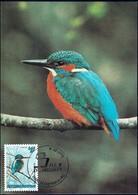 1993 Martin Pêcheur, Eisvogel, Alcedo Atthis, Photo: Günter Ziesler, Michel 2019:1330, 14+2Fr. - Maximum Cards