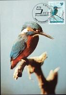 1993 Martin Pêcheur, Eisvogel, Alcedo Atthis, Photo: Dietmar Keil, Michel 2019:1330, 14+2Fr. 2Scans - Maximum Cards