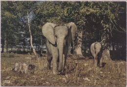 CPM - PARC ZOO DE THOIRY - ELEPHANTS - Edition Du Château - Other
