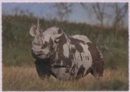 CPM - FAUNE AFRICAINE - RHINOCEROS - Edition Italcolor - Rhinocéros