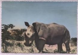 CPSM - FAUNE AFRICAINE - RHINOCEROS - Edition Photo Véritable - Rhinocéros