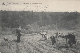 Petite Espinette , ( Rhodes-St-Genèse, Uccle , Ukkel )  Récolte De Pommes De Terre - Rhode-St-Genèse - St-Genesius-Rode