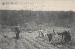 Petite Espinette , ( Rhodes-St-Genèse, Uccle , Ukkel )  Récolte De Pommes De Terre ,agriculture - Rhode-St-Genèse - St-Genesius-Rode