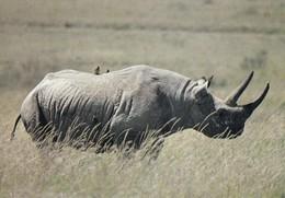 Rhinoceros - Rhinocéros - Neushoorn - Nashorn - Rinoceronte - Pro Natura - WWF Panda Logo - Rhinocéros