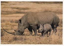 Rhinoceros - Rhinocéros - Neushoorn - Nashorn - Rinoceronte - Rhinocéros