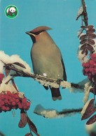 Bird - Oiseau - Vogel - Uccello - Pássaro - Pájaro - Waxwing - WWF Panda Logo - Red Cross Stamp Suomi Finland - Angels