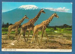 KENYA THE GIRAFFE 1981 - Kenia