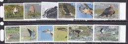 Penrhyn 2018 Birds Of Prey Falcons  Set Of 12v MNH - Owls