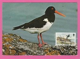 Carte Maximum - Oiseaux - Pie De Mer - Isle Of Man 1983 - Oiseaux