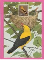 Carte Maximum - Oiseaux - Golden Oriole - Allemagne - Baden-Baden - Moineaux