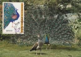 Carte Maximum - Oiseaux - Paons -  Indipex 73 - Paons