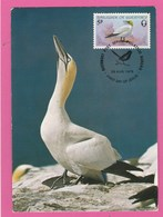 Carte Maximum - Oiseaux - Fou De Bassan - Guernsey 1978 - Oiseaux